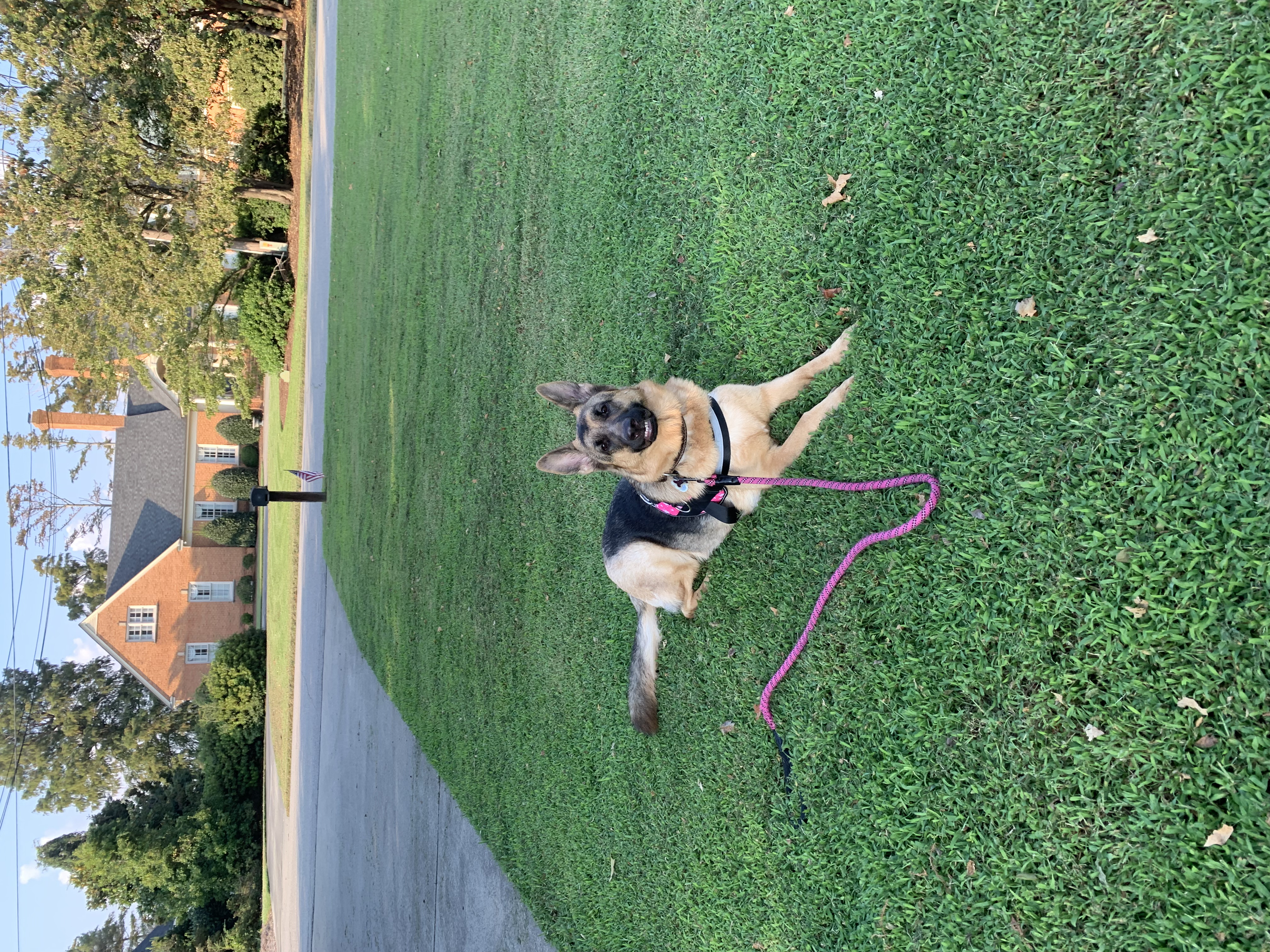 Fritzi is all smiles during a front yard training session